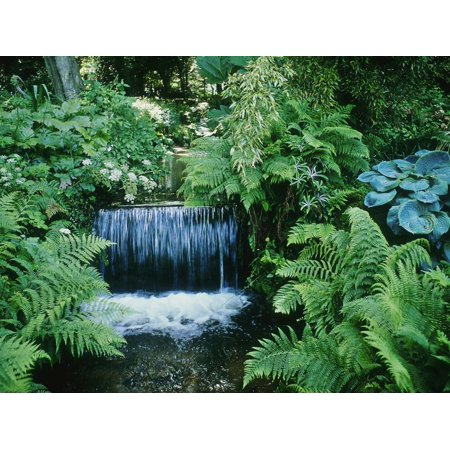 Shallow Waterfall and Stream Shady Planting of Hosta, Fern Fernhill, Ireland (Near Dublin) Print Wall Art By Martine