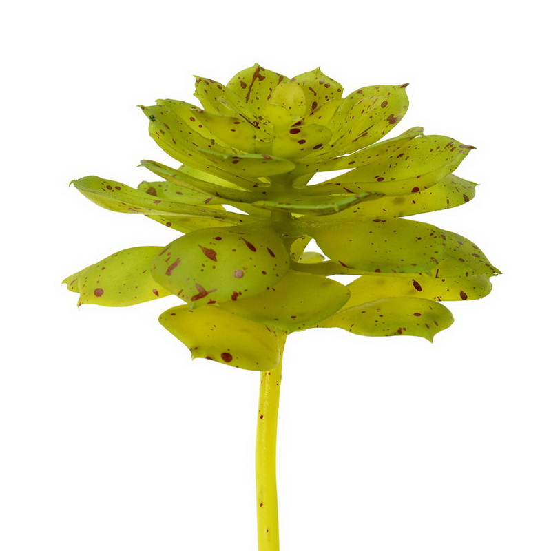 """Vickerman FO180901 6"""" Green/Brown Spotted Echeveria (3/Pk)"""