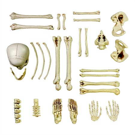 Halloween Haunters 28pc Bag of Plastic Skeleton Skull Bones Set Prop - Skull And Bones Halloween