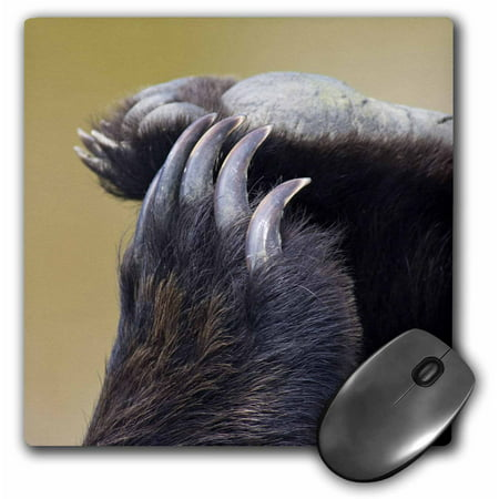 3dRose Grizzly Bear Paws and Claws - US02 JGS0037 - Jim Goldstein, Mouse Pad, 8 by 8