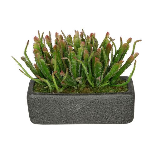 House of Silk Flowers Inc. Artificial Wild Cactus Plant in Decorative Vase