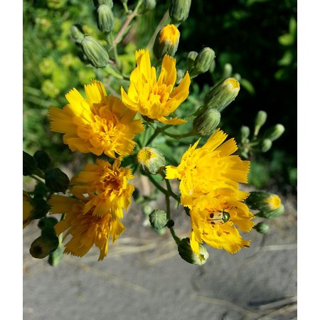 Yellow Flowers Insect Macro Sunny Poster Print 24 x 36