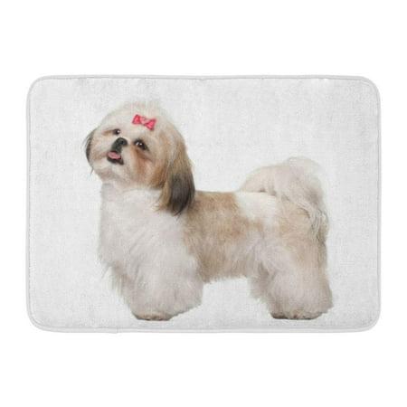 Pok Alone Tan Animal Shih Tzu Standing Against White Dog Bow Rug Doormat Bath Mat 23 6x15 7 Inch