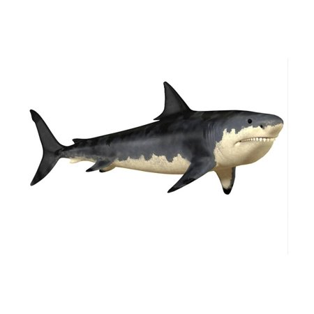 Megalodon Shark, an Enormous Predator from the Cenozoic Era Print Wall Art