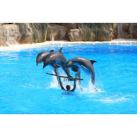 Preview Dolphins Delfin Herd Jump Dolphinarium Poster Print 24 X 36