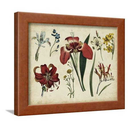 Antique Botanical Chart II Framed Print Wall Art Antique Framed Print