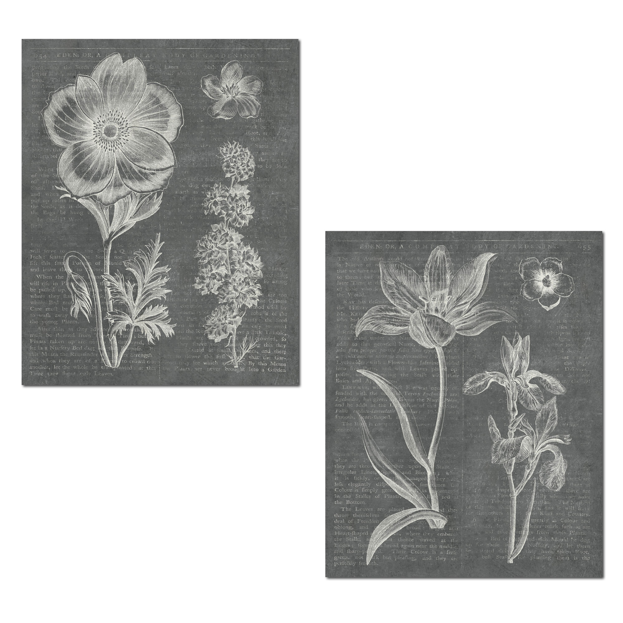 Beautiful Grey & White Spring Botanical Flower Prints by Wild Apple Portfolio; Floral Decor; Two 11x14in Unframed Poster Prints