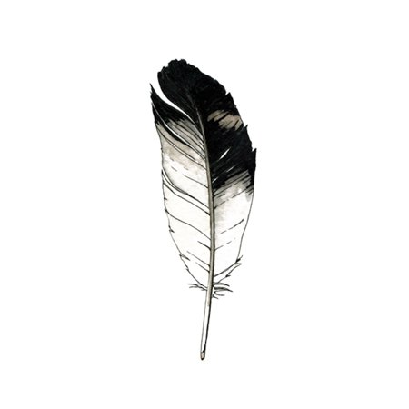 Eagle Wings Tattoos (Tattly Temporary Tattoos - Eagle Feather - Set of 2)