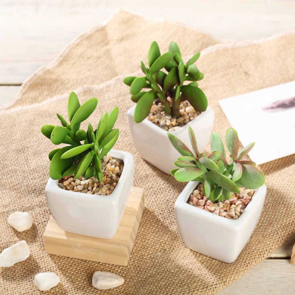 Efavormart Set of 3 | 3'' Assorted Green Mini Artificial Faux Succulent Plants in Ceramic Pot with Decorative Rocks