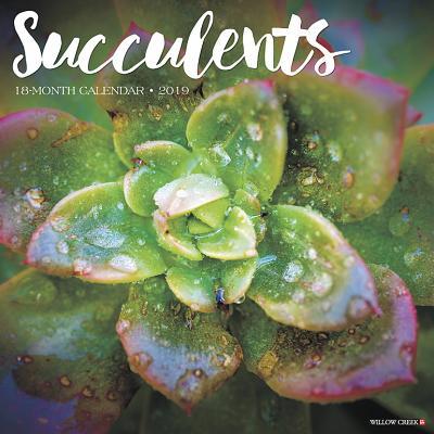 Succulents 2019 Wall Calendar (Other)