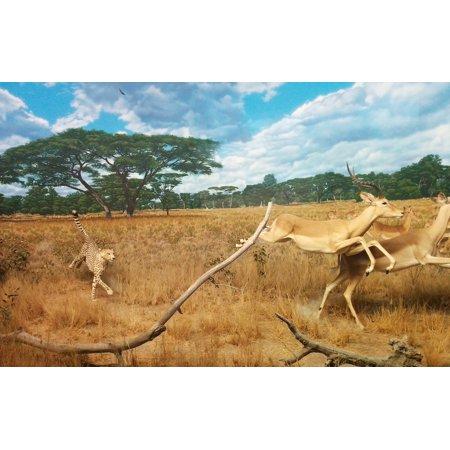 LAMINATED POSTER Chasing Gazelle Hunting Running Cheetah Cat Poster Print 24 x 36