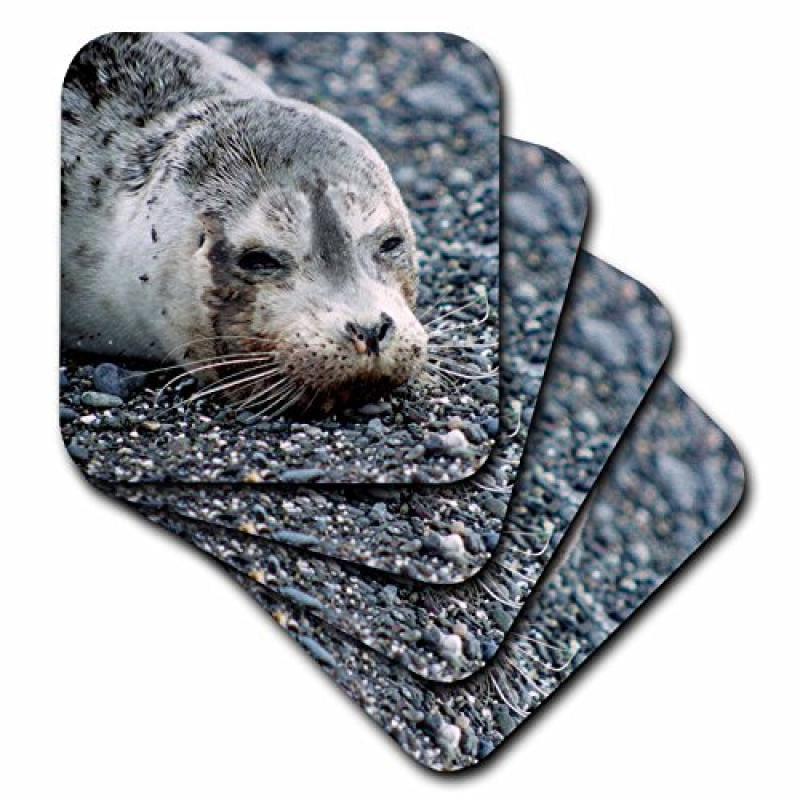 3dRose CST/_96464/_3 Washington Pacific Harbor Seal Pup-Us48 Kwi0009-Kymri Wilt-Ceramic Tile Coasters Set of 4