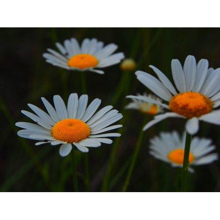Laminated Poster Nature Flower Leaf Plant Natural Spring Floral Poster Print 24 x 36