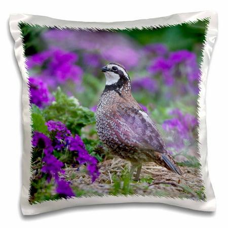 3dRose Northern Bobwhite quail in flower garden, Marion, Illinois, USA. - Pillow Case, 16 by - Illinois Fighting Illini Pillow
