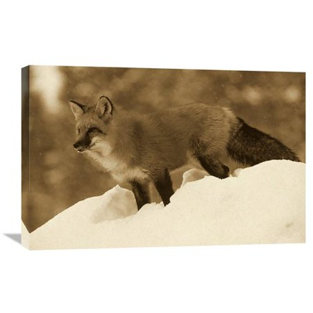 Global Gallery Nature Photographs Red Fox Standing At The Top Of A Snow Bank  Montana By Tim Fitzharris Photographic Print On Wrapped Canvas