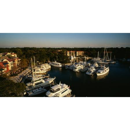 High angle view of yachts moored at a harbor Hilton Head South Carolina USA Poster
