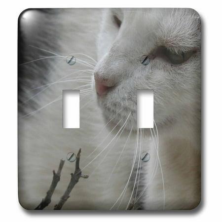 3dRose The Whisker Trail black and white cat cat cats cute pet pet por