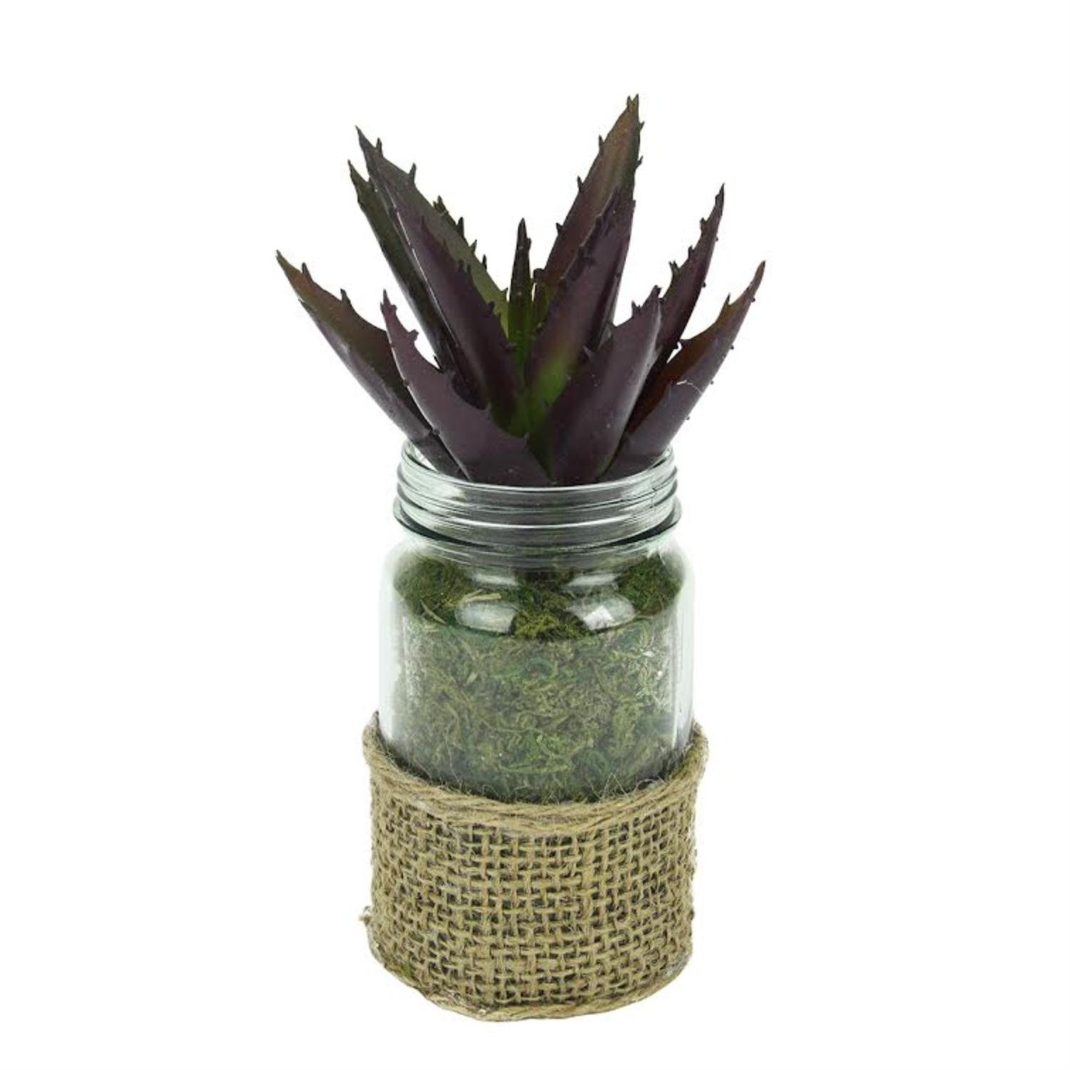 Artificial Potted Aloe Succulent Plant in Glass Jar with Burlap Grip 7.25""