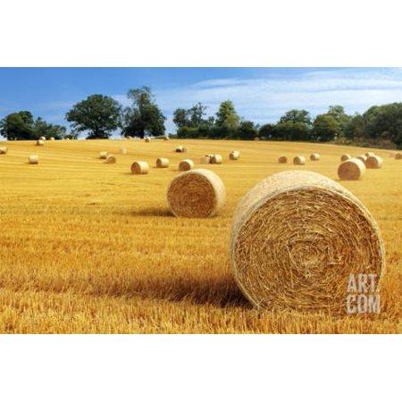 Hay Bail (Hay Bail Harvesting in Golden Field Landscape Print Wall Art By)