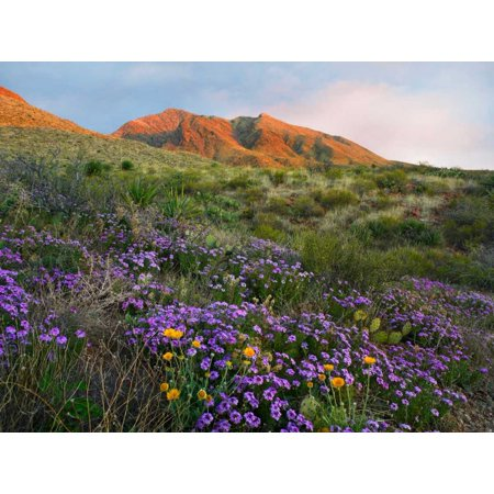 Herb of the Cross at Franklin Mountains State Park Chihuahuan Desert Texas Poster Print by Tim Fitzharris - Desert Mountain Park Halloween