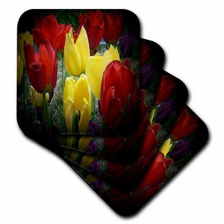 3dRose Red, Yellow and Purple Tulips in Spotlight, Soft Coasters, set of - Purple Spotlight