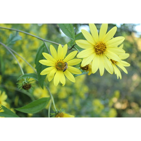 Canvas Print Yellow Flower Flowers Yellow Honey Plants Bee Stretched Canvas 10 x
