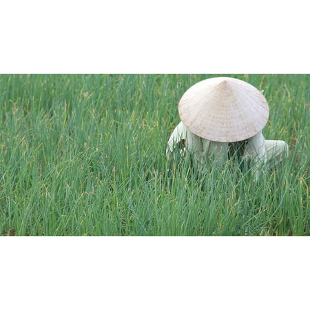 Peel-n-Stick Poster of Vietnam Rice Fields Indochina Hoian Conical Hat Poster 24x16 Adhesive Sticker Poster - Conical Hat