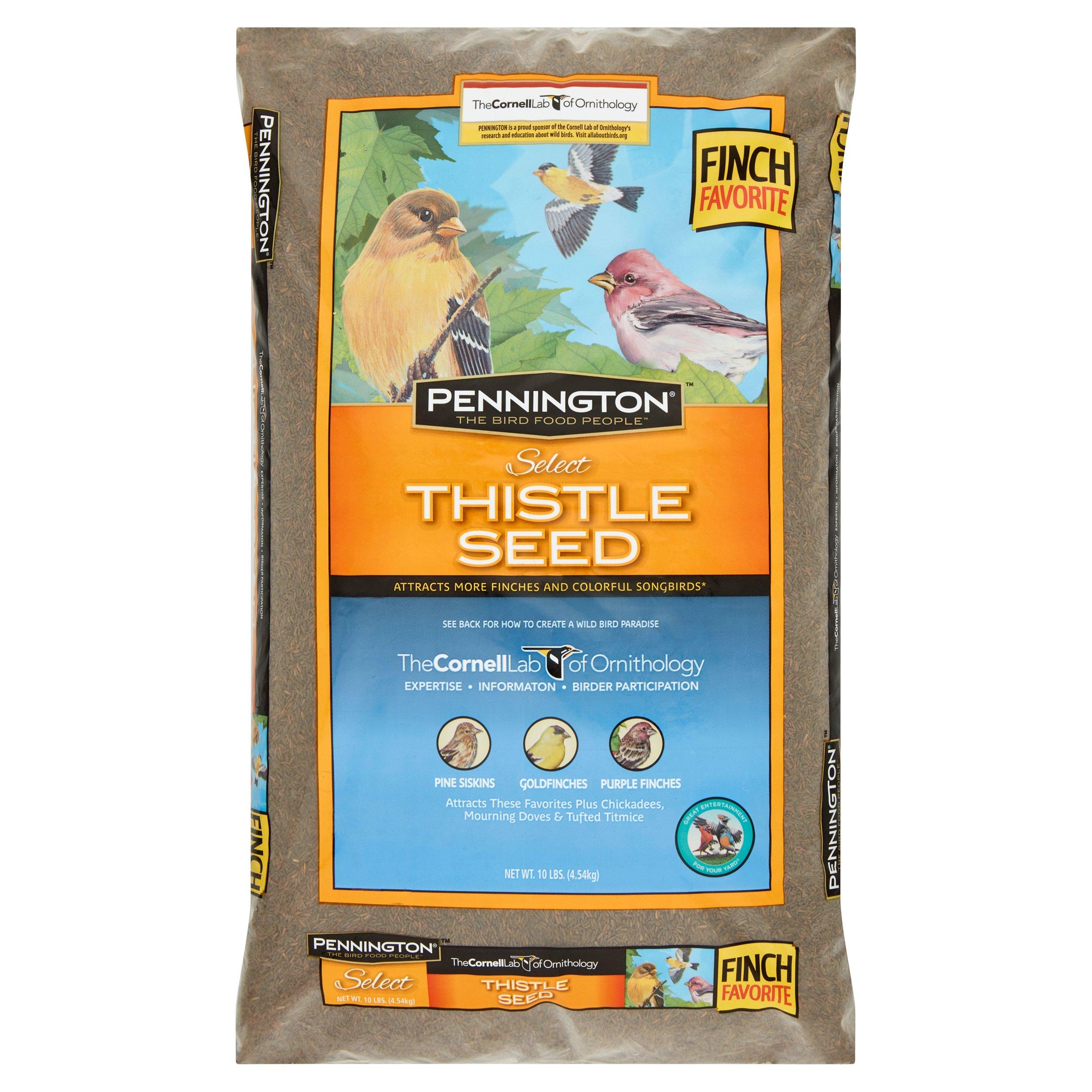 Pennington Thistle Seed Wild Bird Feed and Seed, 10 lbs