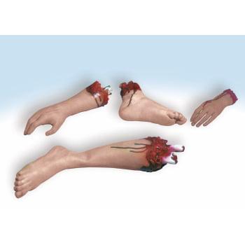 BODY PARTS-ARM