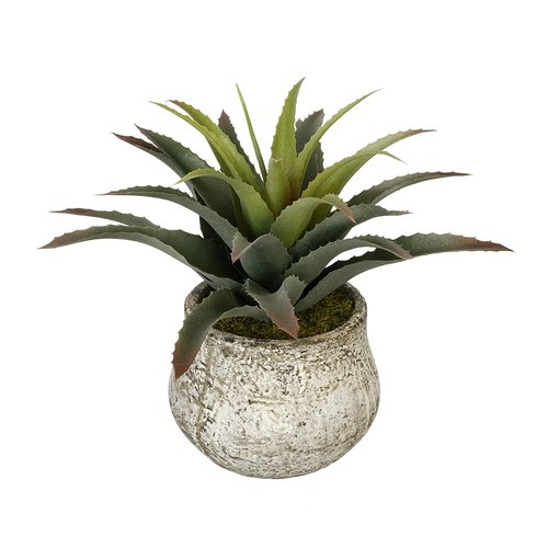 House of Silk Flowers Inc. Artificial Star Succulent Desk Top Plant in Pot