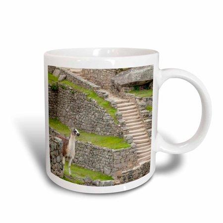 3dRose Llama at Machu Picchu, Aguas Calientes, Peru, Ceramic Mug, 15-ounce