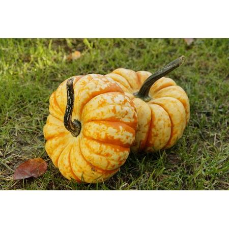 LAMINATED POSTER Pumpkin Autumn Decoration October Gourd Pumpkins Poster Print 24 x 36](Gourd Pumpkin)