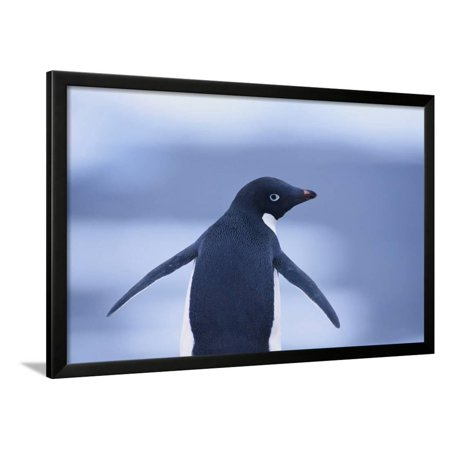 Adelie Penguin Framed Print Wall Art By DLILLC - Walmart.com