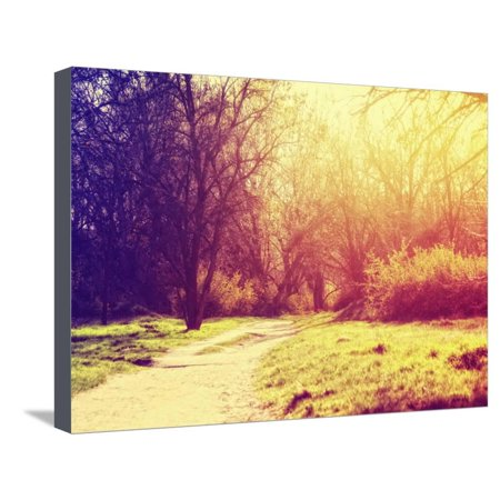 A Path Going Though a Forest or Park with Trees with Autumn Leaves Done with a Retro Vintage Instag Stretched Canvas Print Wall Art By