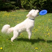 Evelots Plastic Pet Frisbee, Dog Toys, Durable Travel Flying Disc, Medium