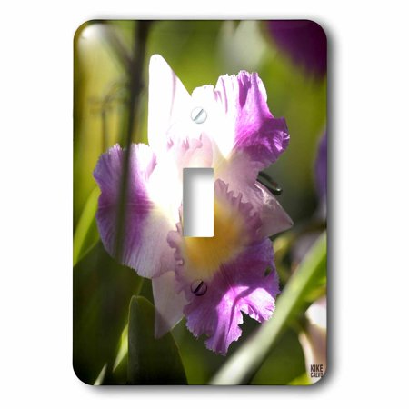 3dRose Orchid is a colorful garden flower in which is a spring tropical plant and bouquet when blossom - Single Toggle Switch - Spring Blossom Plate