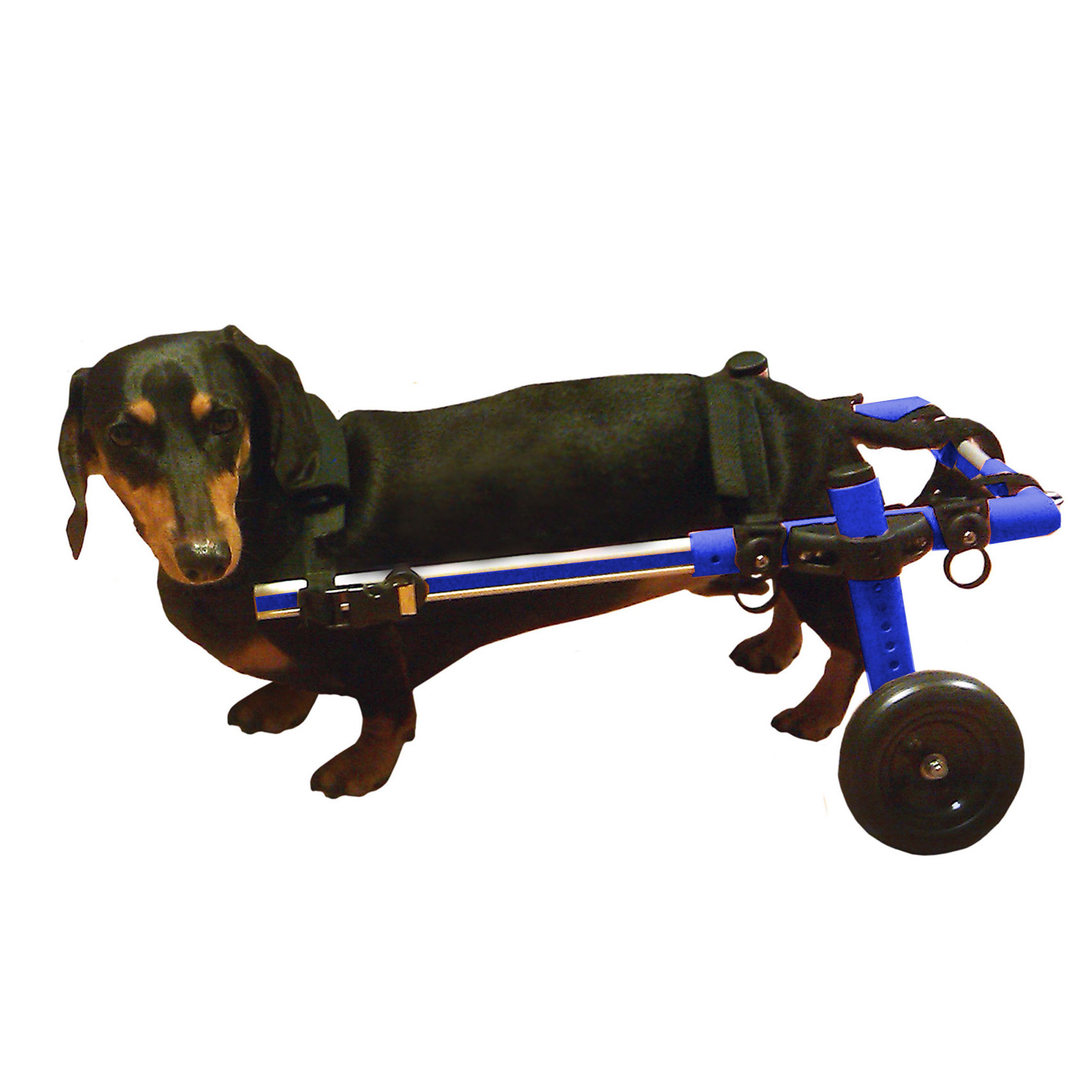 Dog Wheelchair For Small Dogs 8-25 lbs Blue - By Walkin' Wheels