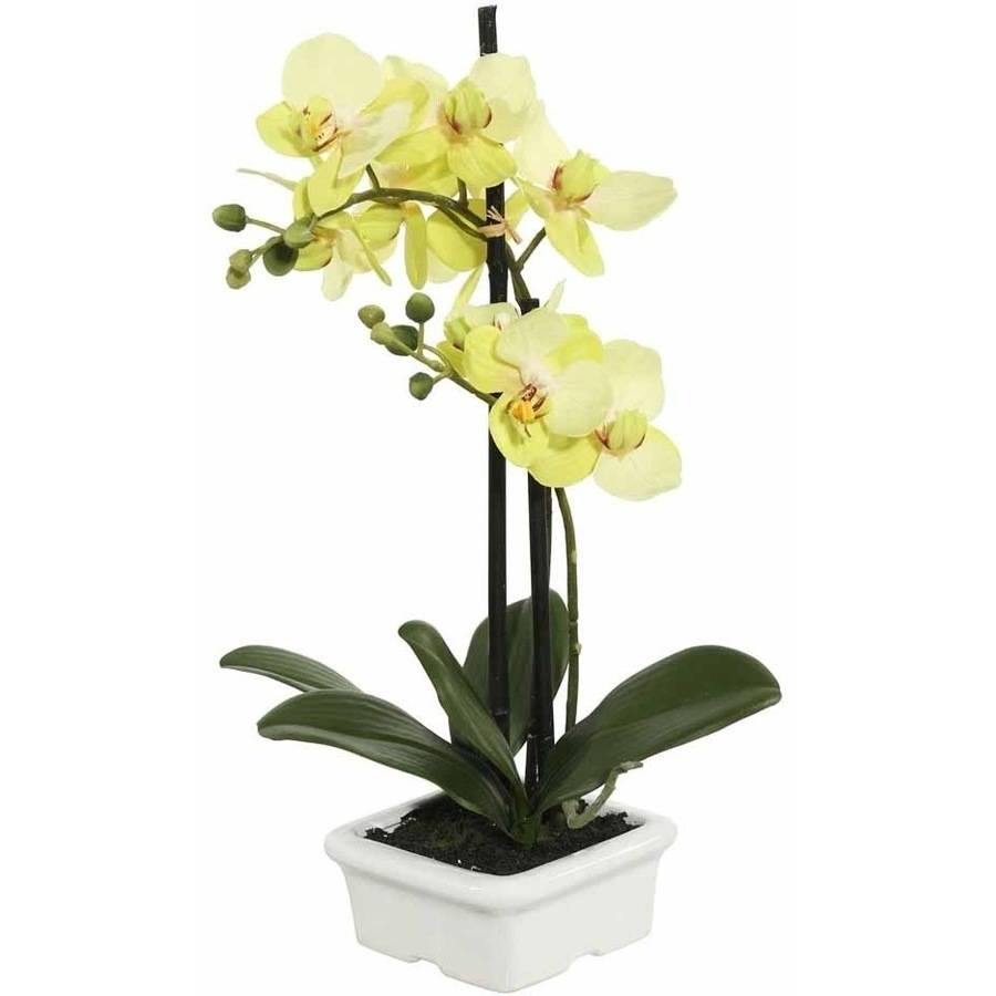 "Vickerman 15.5"" Artificial Green Orchid Featuring 2 Blossoms Potted in a White Ceramic Container"