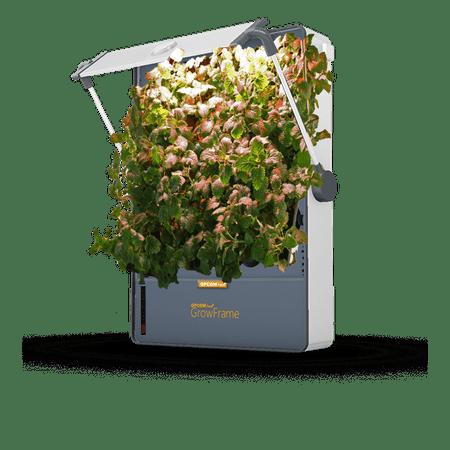 OPCOM Farm GrowFrame Indoor Smart Hydroponic System - Walmart com