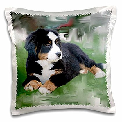 3dRose Bernese Mountain Dog, Pillow Case, 16 by 16-inch