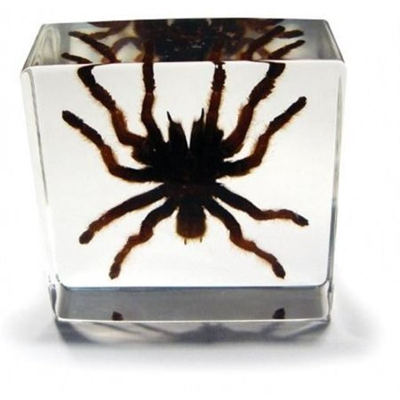 Tarantula Desk Decoration with Box Makes for a Perfect Gift for Spider (Tarantula Desk Decoration)