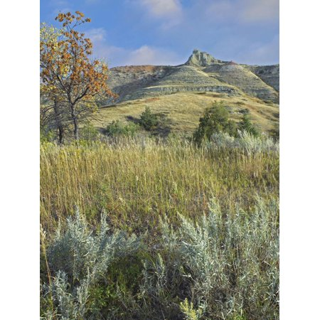 Dry Autumn in the South Unit, Theodore Roosevelt National Park, North Dakota Print Wall Art By Tim Fitzharris