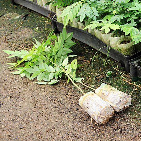 100pcs Plant Fiber Nursery Pots Seedling Raising Bag Plants Holder Garden Supply - Cheap Garden Supplies