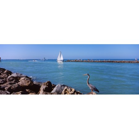 Great Blue Heron perching on a rocks South Jetty Venice Sarasota County Florida USA Poster Print