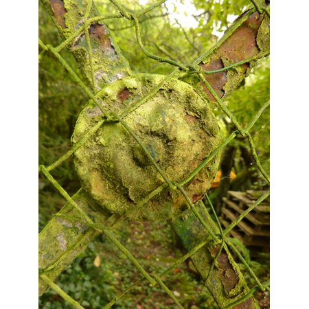 Canvas Print Steel Copper Stainless Plant Old Moss Fence Stretched Canvas 10 x 14