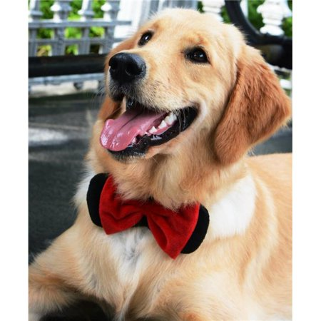 Heads Up for Tails HUFTAC044 Tie The Knot Dog Bow Tie, Black & Red Velvet - Extra Large