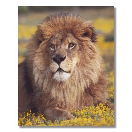 (African Lion Sitting Flowers Wall Picture Art Print)