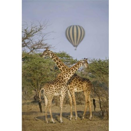 Panoramic Images PPI138962 Two Masai giraffes - Giraffa camelopardalis tippelskirchi and a hot air balloon  Tanzania Poster Print by Panoramic Images - 16 x 24 - image 1 of 1