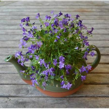 CS/3 - Green Glazed Extra Large Teapot Planter](Teapot Planter)