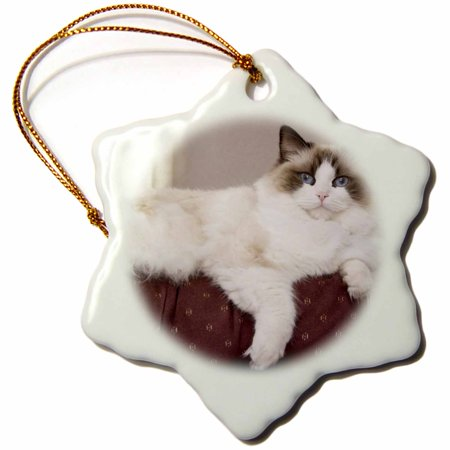3dRose Purebred Rag Doll Cat lounging - NA02 PWO0122 - PiperAnne Worcester, Snowflake Ornament, Porcelain, 3-inch